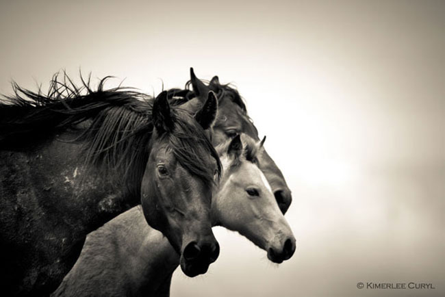 Wind dancer org wild horse photography